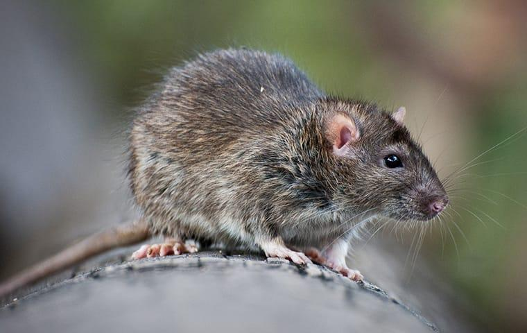 Pest Control   Animal Trapping
